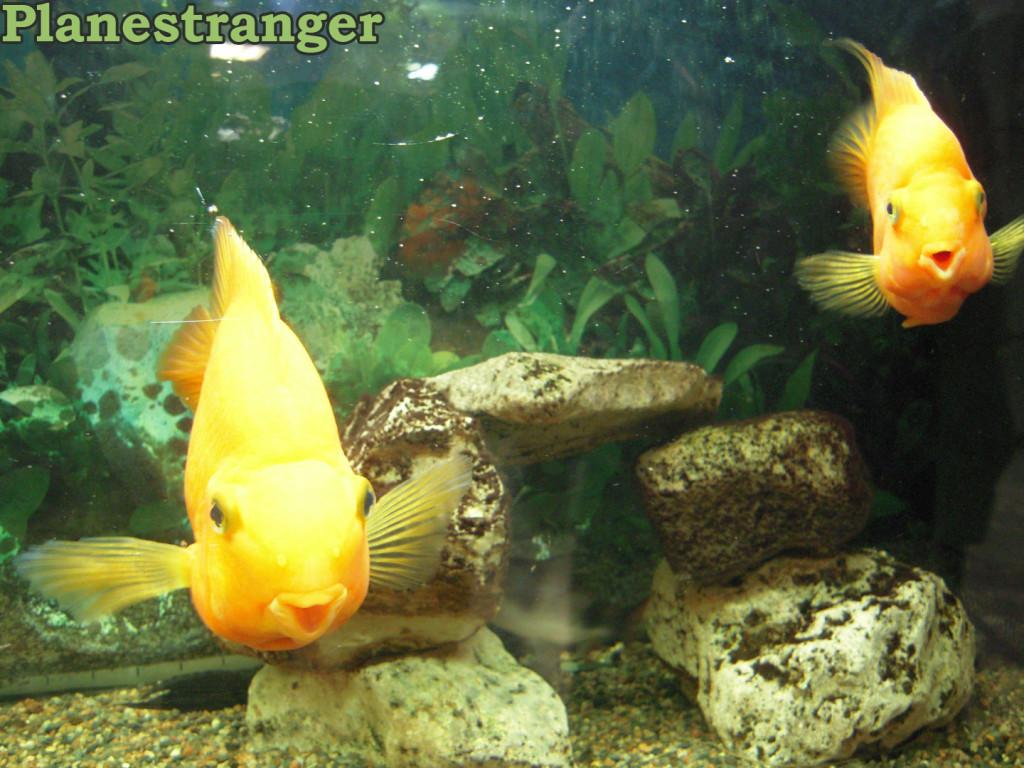 Рыбы смотрят на тебя, как...