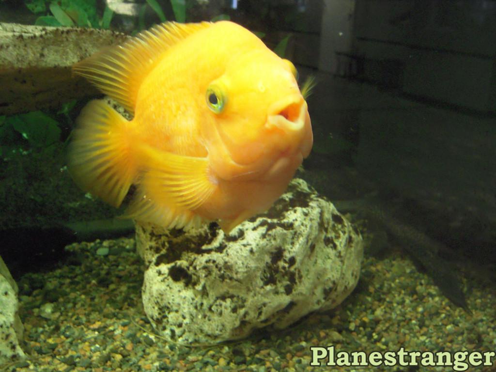 Рыба и хвост тритона (предположительно)