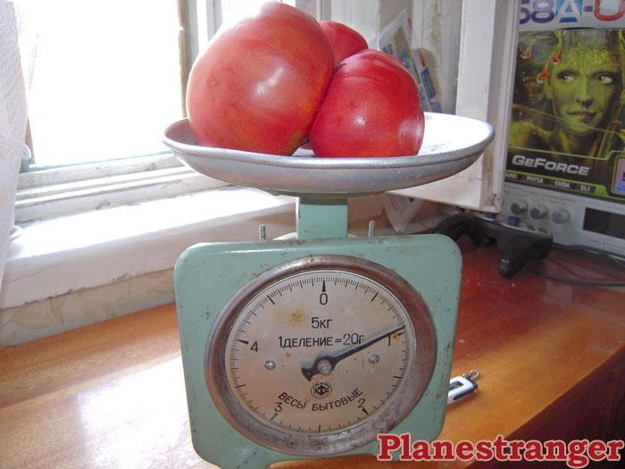kilogram of pure tomato