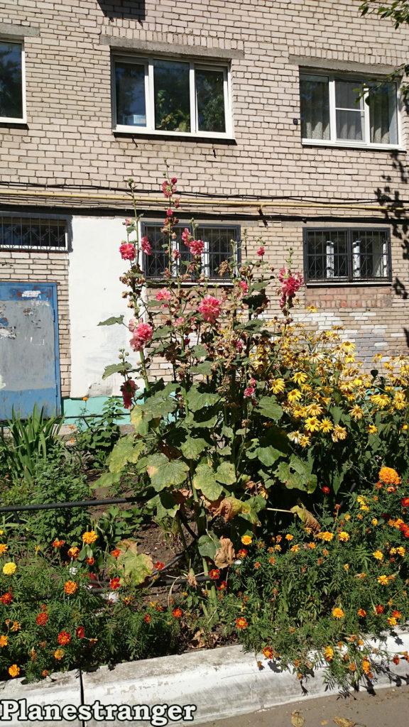 flowers street togliatti