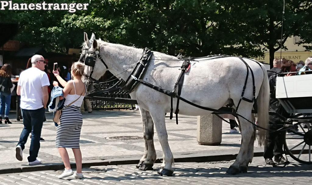 horses prague old town square лошади прага староместская площадь