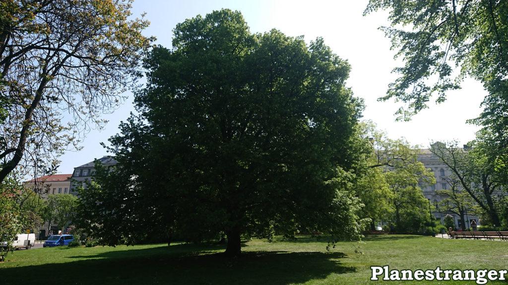prague park huge tree velký strom park praha